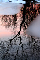 Winter Reflections I